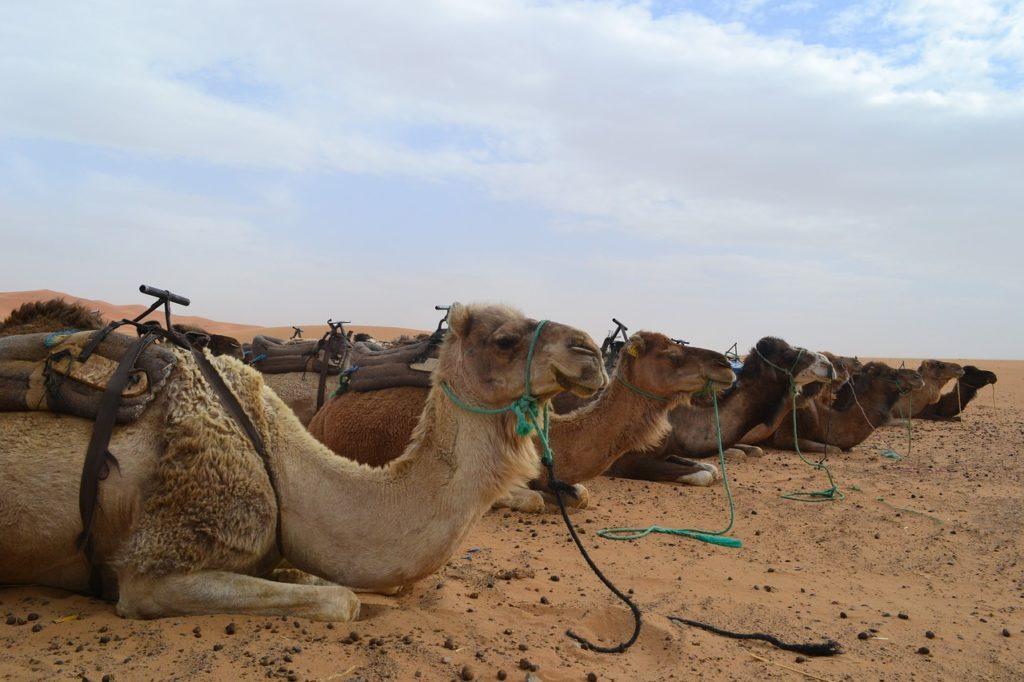 Viaggi nel deserto e Grand sud del Marocco Zagor - Merzouga