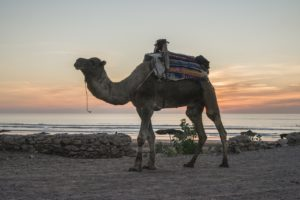 TOUR DA MARRAKECH SURF E YOGA 5 GIORNI